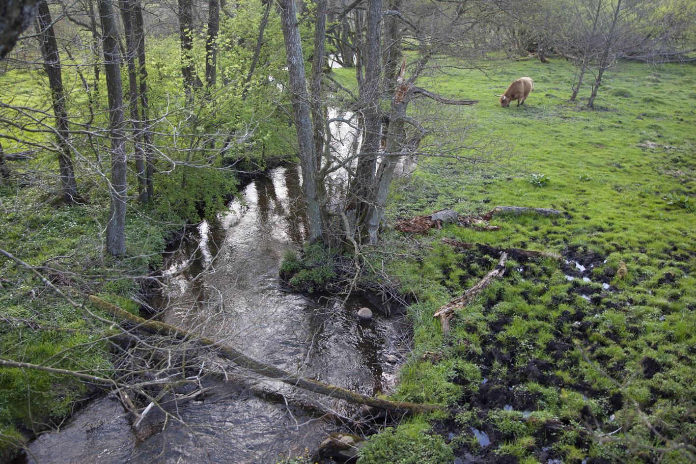 Et naturligt ureguleret vandløb