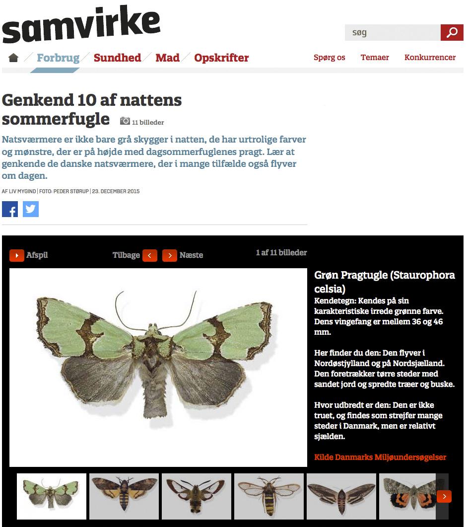 artikler genkend af nattens sommerfugle