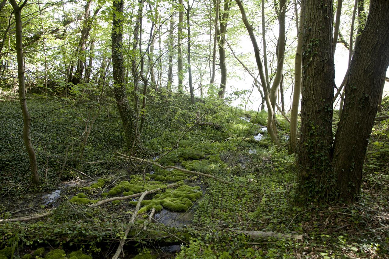"""Hvad er urørt skov? """"Urørt skov er skovområder udpeget til biodiversitetsformål uden omkostningstung naturpleje. Urørt skov betyder, at der ikke drives skovdrift. Urørt skov udelukker hverken mennesker, græssende dyr eller naturgenopretning"""""""